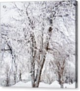 Ice Covered Trees One Painted Acrylic Print