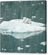 Ice Floe Acrylic Print