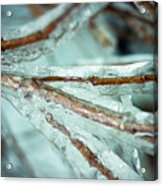 Ice Ice Baby Acrylic Print