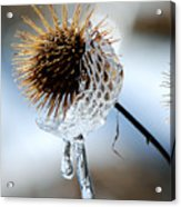 Ice On Burdox Acrylic Print