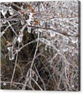 Ice Pearls Acrylic Print