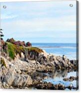 Ice Plant Along The Monterey Shore 2 Acrylic Print