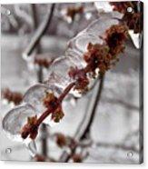 Ice Rain In Springtime Acrylic Print