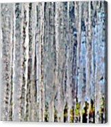 Ice Sickle Curtains Acrylic Print