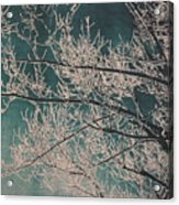Ice Storm Branches - Blue Acrylic Print