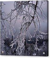 Ice Trees Acrylic Print