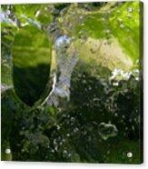 Ice Window Acrylic Print