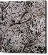 Iced Branches Acrylic Print