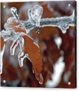 Iced Leaves Acrylic Print