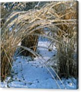 Iced Ornamental Grass Acrylic Print