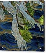 Iced Pine Acrylic Print