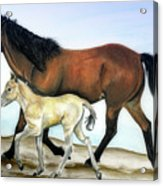 Icelandic Mare And Foal Acrylic Print