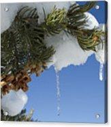 Icicles On Pine Tree Acrylic Print