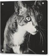 Ickis The Cat Acrylic Print