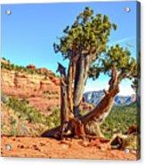 Iconic Southwest Acrylic Print