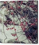 Icy Berries Acrylic Print