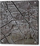Icy Branches Acrylic Print
