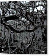 Icy Fingers Acrylic Print