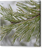 Icy Fingers Of The Pine Acrylic Print
