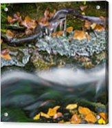 Icy Foliage Stream Acrylic Print