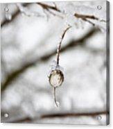 Icy Jewel Acrylic Print by Rebecca Cozart