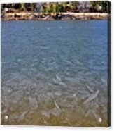 Icy Lake Acrylic Print