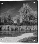 Icy Marsh Acrylic Print