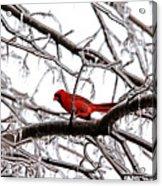 Icy Perch Acrylic Print