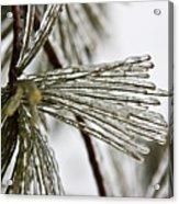 Icy Pines Acrylic Print