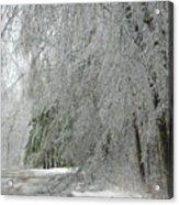 Icy Street Trees Acrylic Print