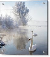 Icy Swan Lake Acrylic Print by E.M. van Nuil