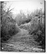 Icy Trail In Black And White Acrylic Print
