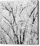 Icy Tree Acrylic Print
