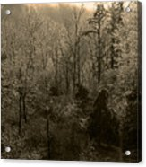 Icy Trees In Sepia Acrylic Print