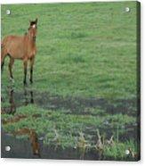 Idaho Farm Horse1 Acrylic Print