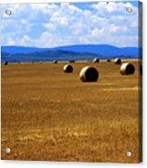 Idaho Hay Acrylic Print