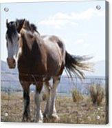Idaho Work Horse 2 Acrylic Print