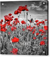 Idyllic Field Of Poppies Colorkey Acrylic Print