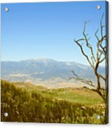 Idyllwild Mountain View With Dead Tree Acrylic Print