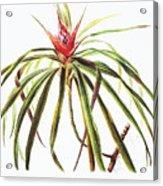 Ieie Plant Art Acrylic Print