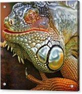 Iguana Full Of Color Acrylic Print
