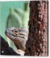 Iguana Head Acrylic Print