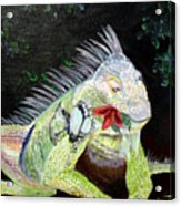 Iguana Midnight Snack Acrylic Print