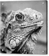 Iguana Stardust Acrylic Print