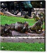 Iguana Trio Acrylic Print