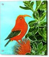 IIwi Scarlet Honeycreeper Bird #54 Acrylic Print