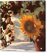 Il Girasole Acrylic Print