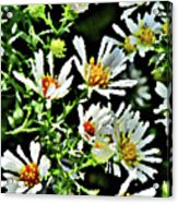 Illinois Wildflowers 3 Acrylic Print