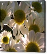 Illuminated Daisies Photograph Acrylic Print