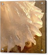 Illuminated Jellyfish Acrylic Print